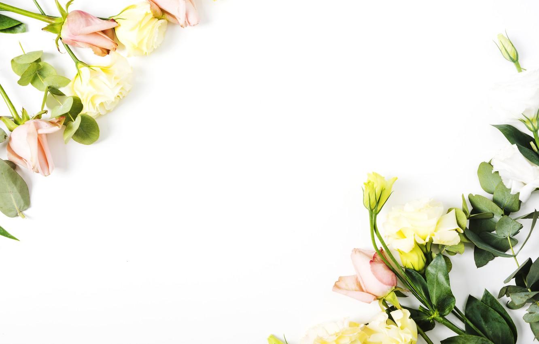 Wallpaper Flowers Roses White Background Flower Decor Roses