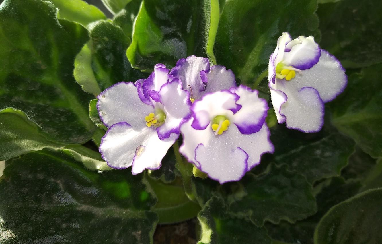 Photo wallpaper Flowers, Flowers, Violet