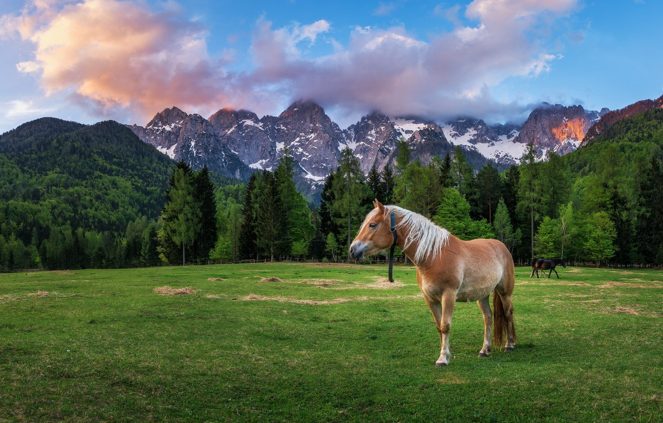 Photo wallpaper field, forest, landscape, mountains, nature, horse, horse, Alps, The Dolomites