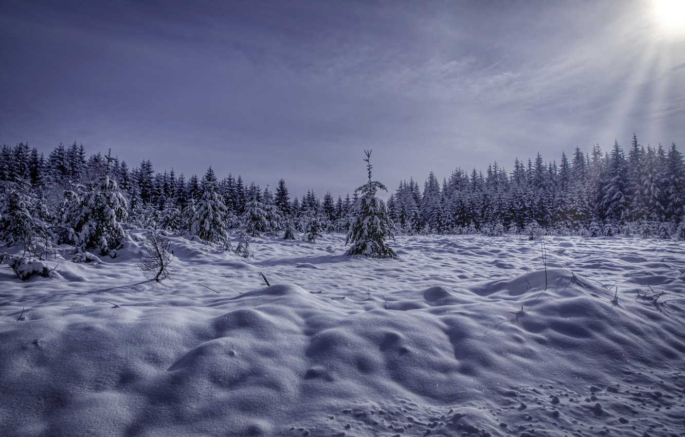 Photo wallpaper winter, forest, snow, morning