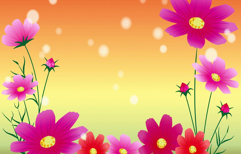 Photo wallpaper flowers, postcard, kosmeya, template, blank
