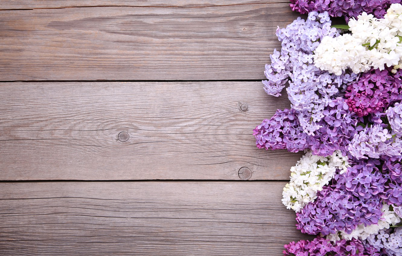 Photo wallpaper flowers, background, wood, flowers, lilac, purple, lilac