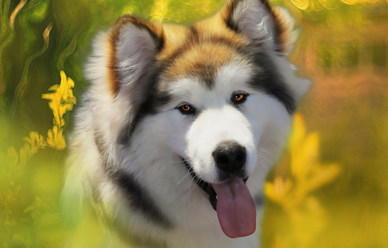 Photo wallpaper language, background, each, dog