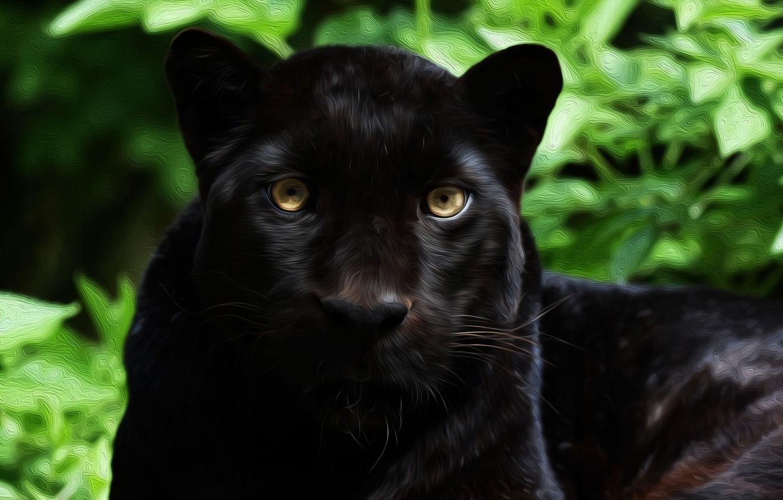 Photo wallpaper face, predator, Jaguar, wild
