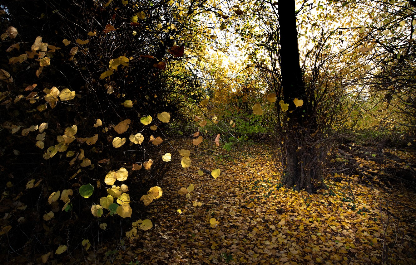 Photo wallpaper autumn, forest, leaves