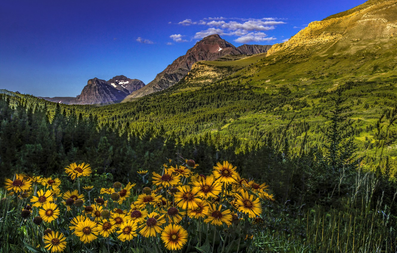 Wallpaper Forest Flowers Mountains Valley Montana
