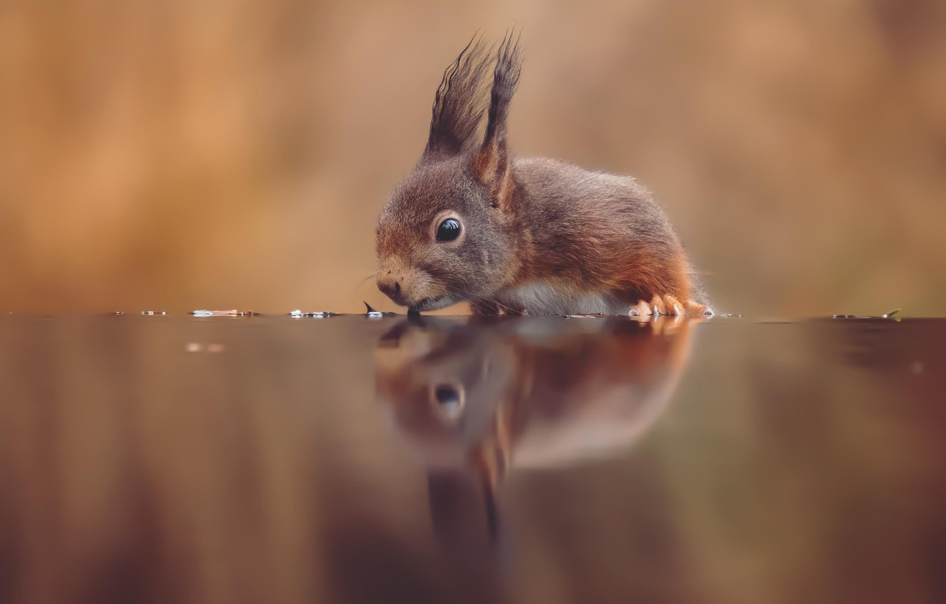 Photo wallpaper water, reflection, background, thirst, protein, red, bokeh