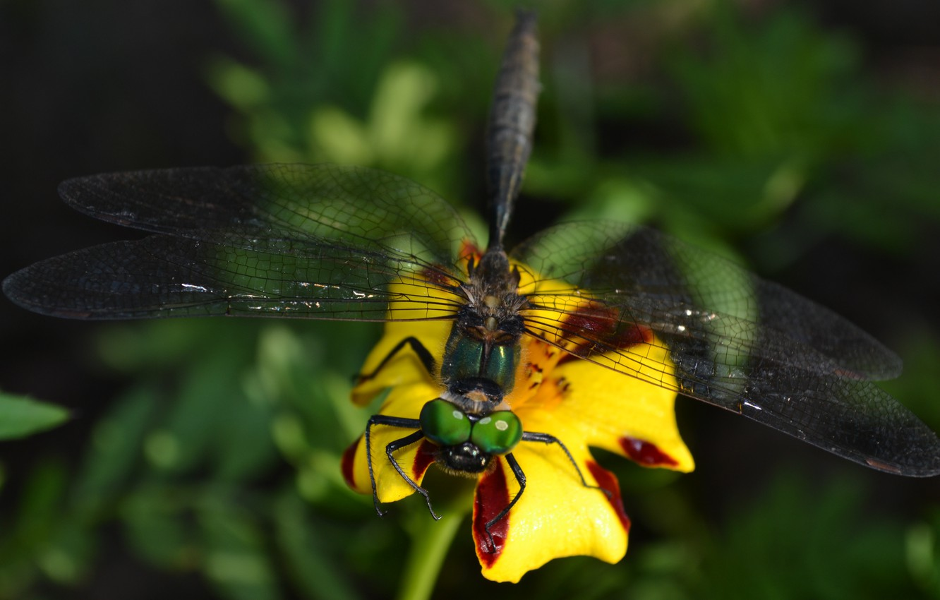 Photo wallpaper summer, grass, eyes, flowers, insects, nature, green, dragonflies