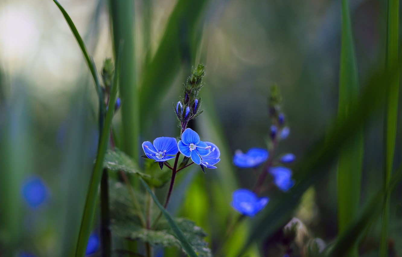 Photo wallpaper flower, grass, macro, photo, bokeh