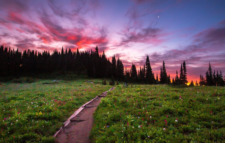 Photo wallpaper trees, landscape, sunset, nature, meadow, track, USA, grass, national Park, National Park, Mount Rainier, Mount …