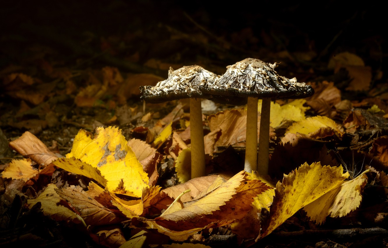 Photo wallpaper leaves, nature, mushrooms