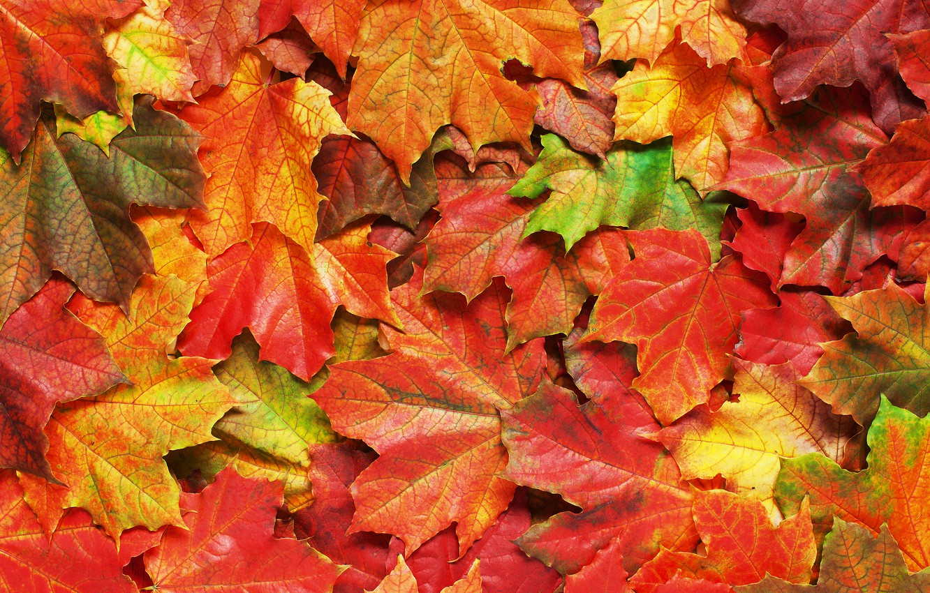 Photo wallpaper autumn, leaves, background, colorful, rainbow, maple, autumn, leaves, maple