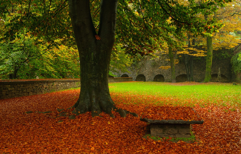 Photo wallpaper autumn, grass, leaves, tree
