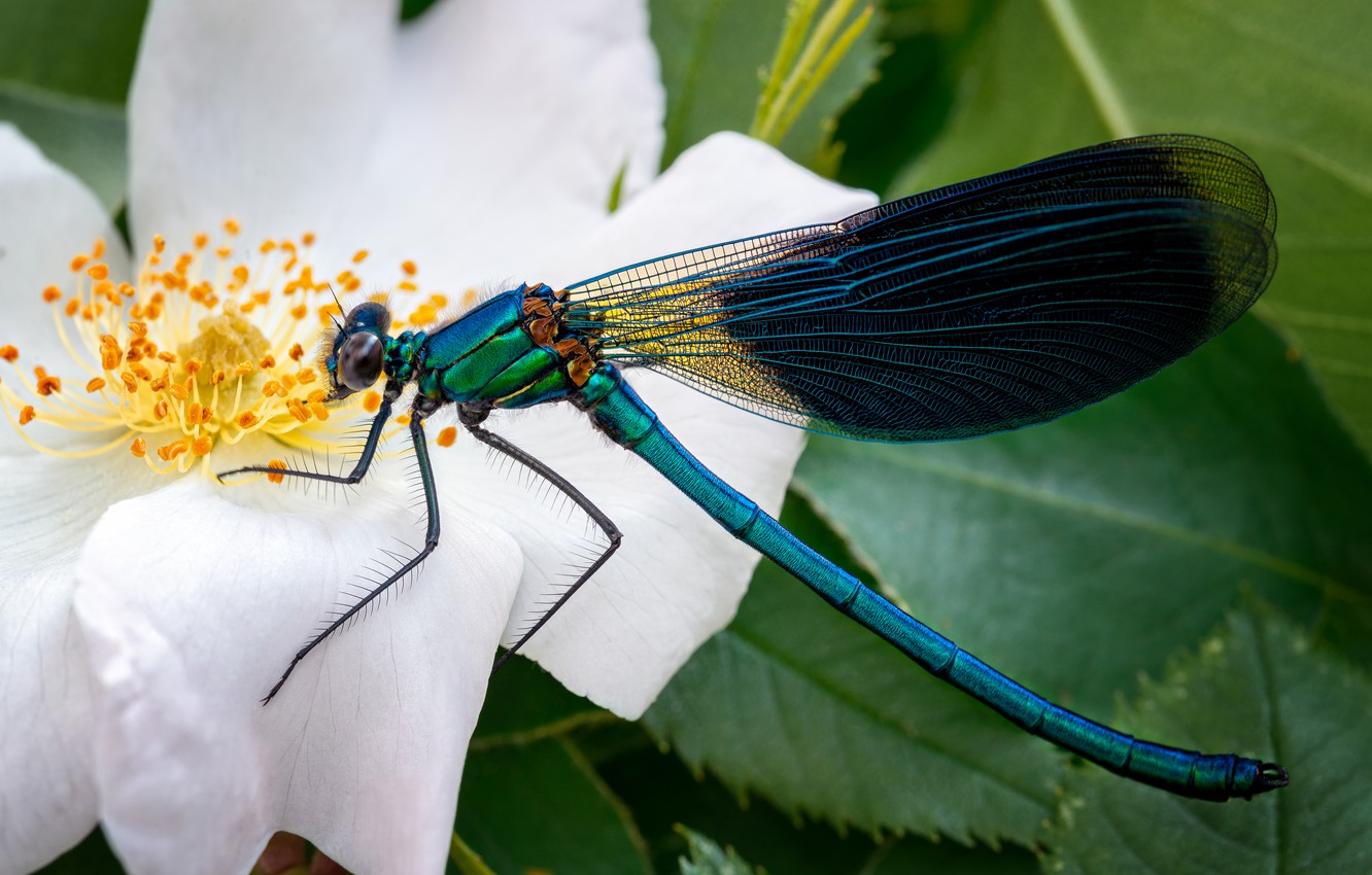 Photo wallpaper animals, flower, summer, macro, nature, dragonfly, briar, insect