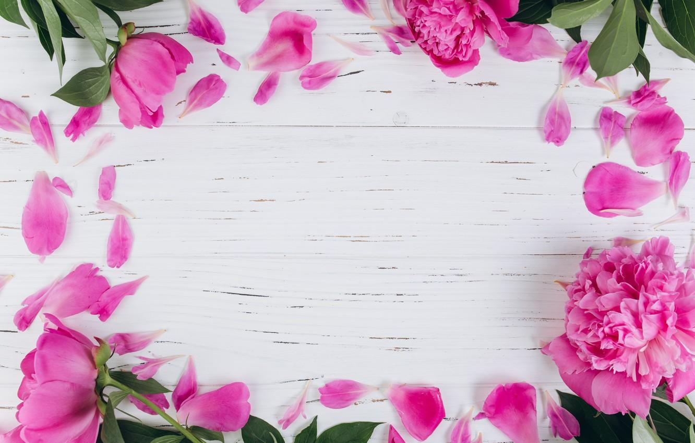 Photo wallpaper flowers, petals, peonies