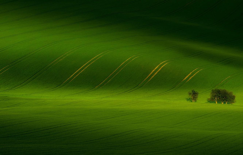 Photo wallpaper greens, field, trees, nature