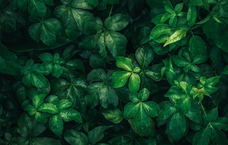 Photo wallpaper leaves, drops, macro, nature, green, rain
