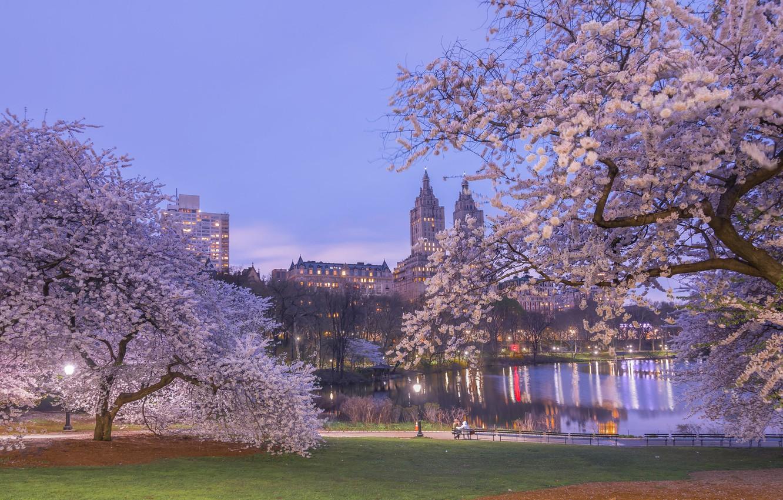 Wallpaper Central Park Central Park Park New York City Trees