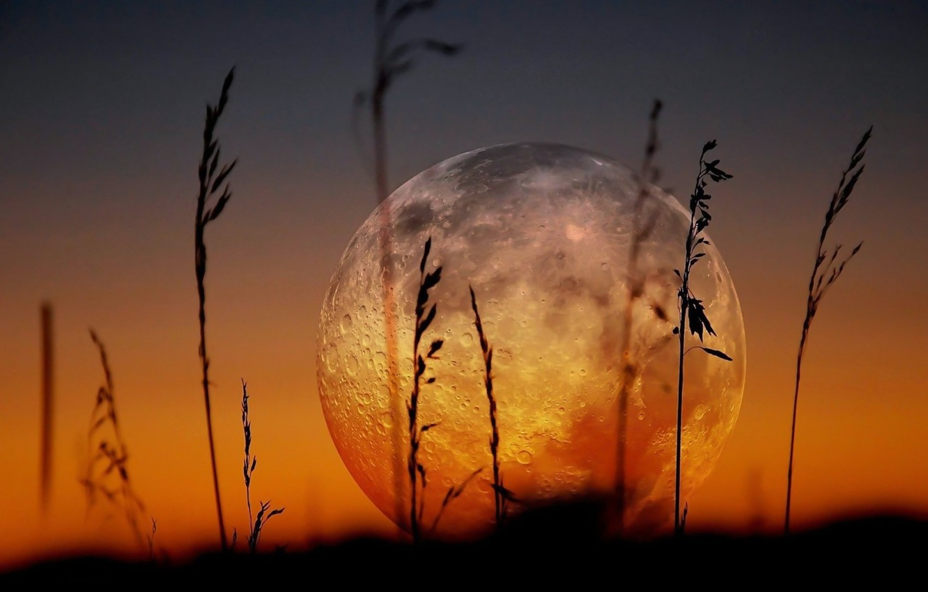 Photo wallpaper The SKY, The MOON, MACRO, GRASS, A MONTH