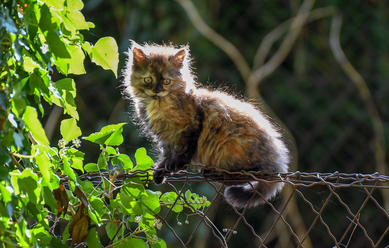 Photo wallpaper cat, leaves, the fence, fluffy, kitty, cat