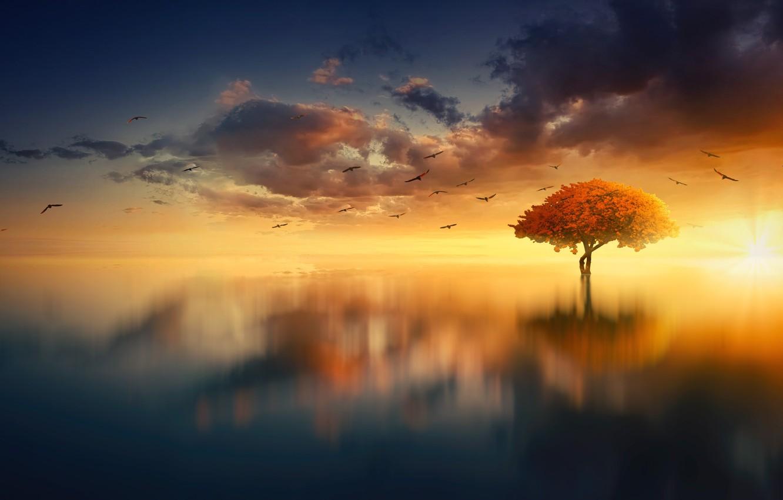 Photo wallpaper Sunset, The sun, The sky, Water, Clouds, The ocean, Reflection, Sea, Tree, Sunrise, Horizon, Birds, …
