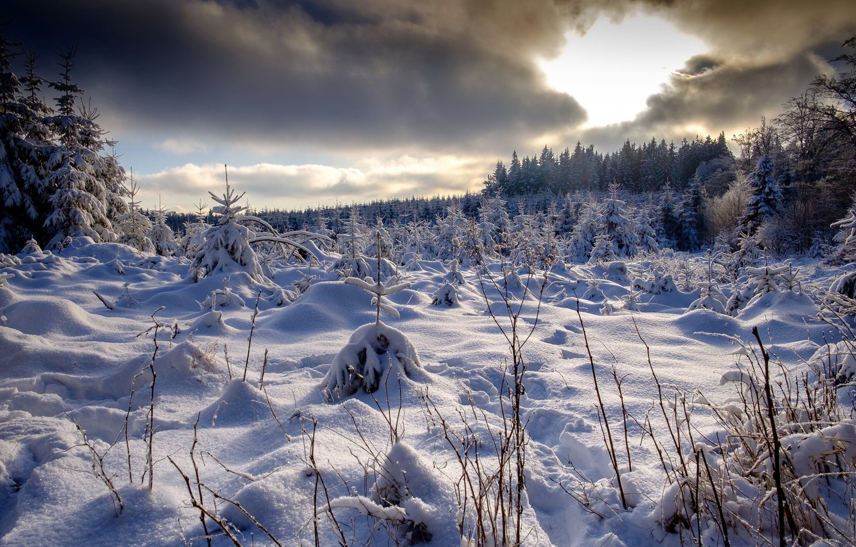Photo wallpaper winter, forest, snow
