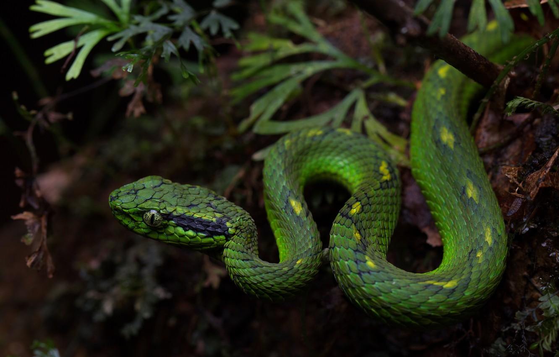 Photo wallpaper nature, snake, green, reptile