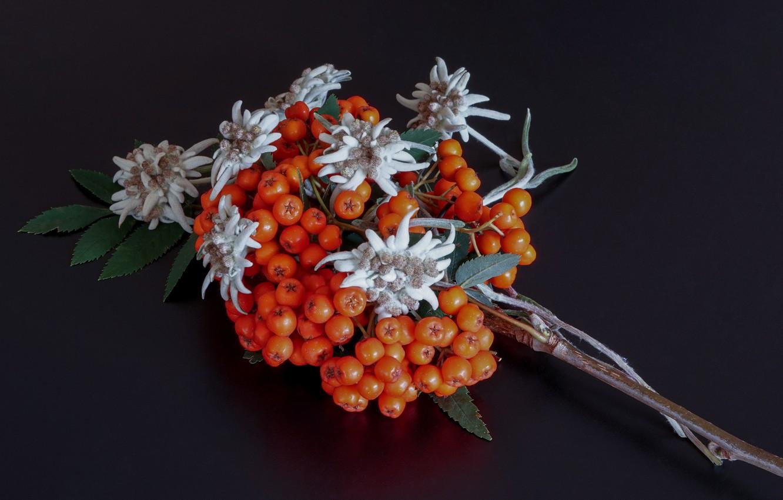 Photo wallpaper macro, berries, background, branch, Rowan