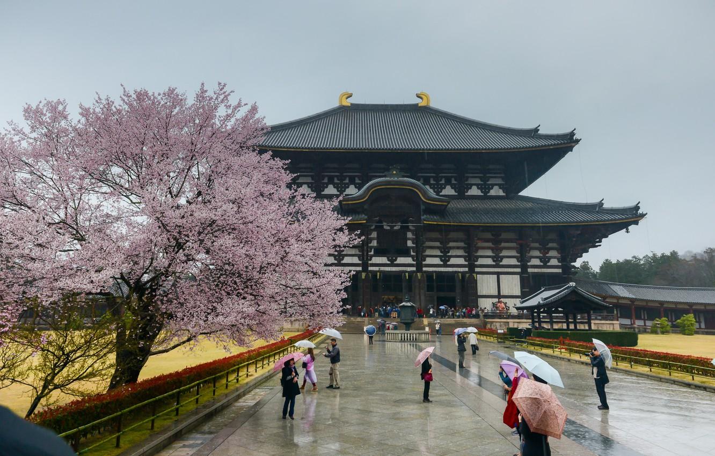 Photo wallpaper Sakura, Japan, Japan, Architecture, Sakura, Nara, Nara, Architecture