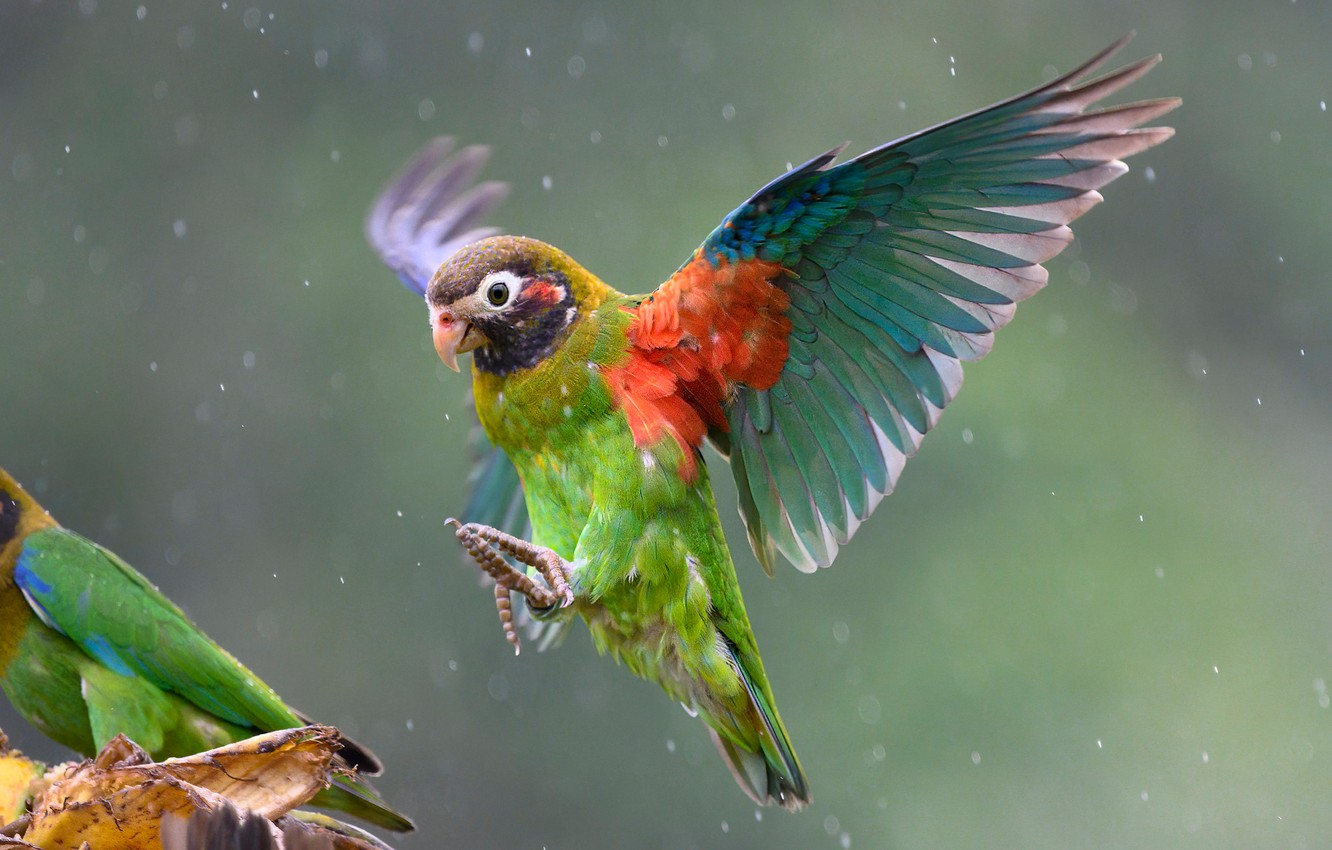 Photo wallpaper rain, bird, wings, parrot