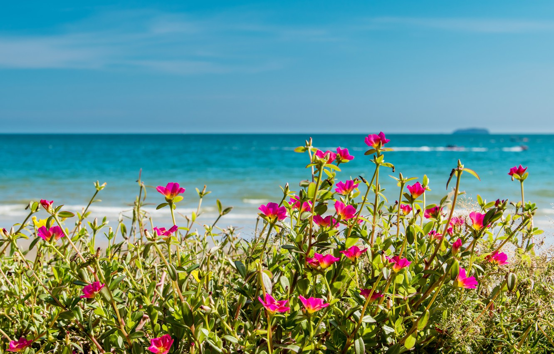 Photo wallpaper sea, beach, summer, the sky, the sun, flowers, shore, summer, beach, sea, pink, flowers