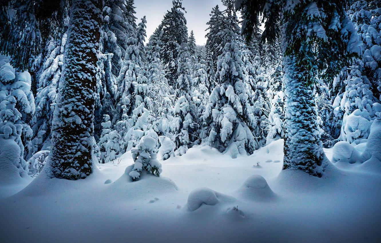 Photo wallpaper winter, snow, trees, landscape, nature, trunks, ate, Robert Didierjean