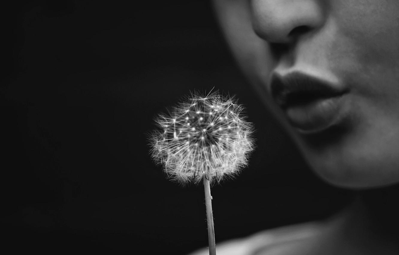 Photo wallpaper flower, dandelion, people