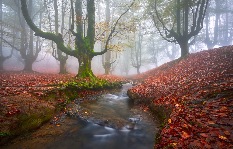 Photo wallpaper autumn, forest, trees, fog, stream, foliage, moss, haze, Spain