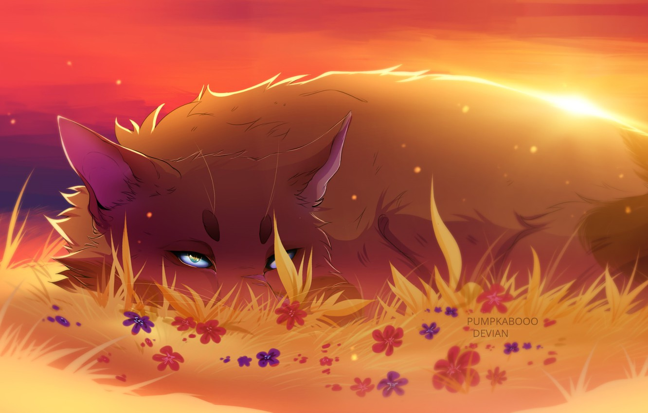 Photo wallpaper sunset, tail, blue eyes, flowers, ears, in the grass, red Fox, fox demon, curled up, …