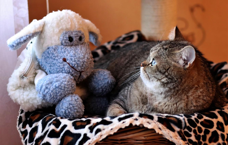 Photo wallpaper cat, cat, look, face, pose, grey, toy, portrait, lies, plaid, basket, striped, looks, sheep, blue, …