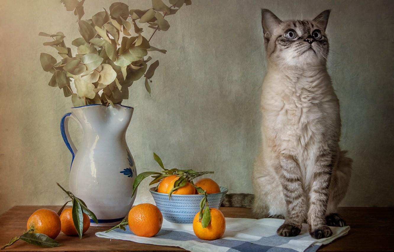 Photo wallpaper cat, cat, bouquet, oranges, pitcher, sitting