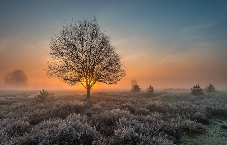 Photo wallpaper frost, field, tree, dawn, morning
