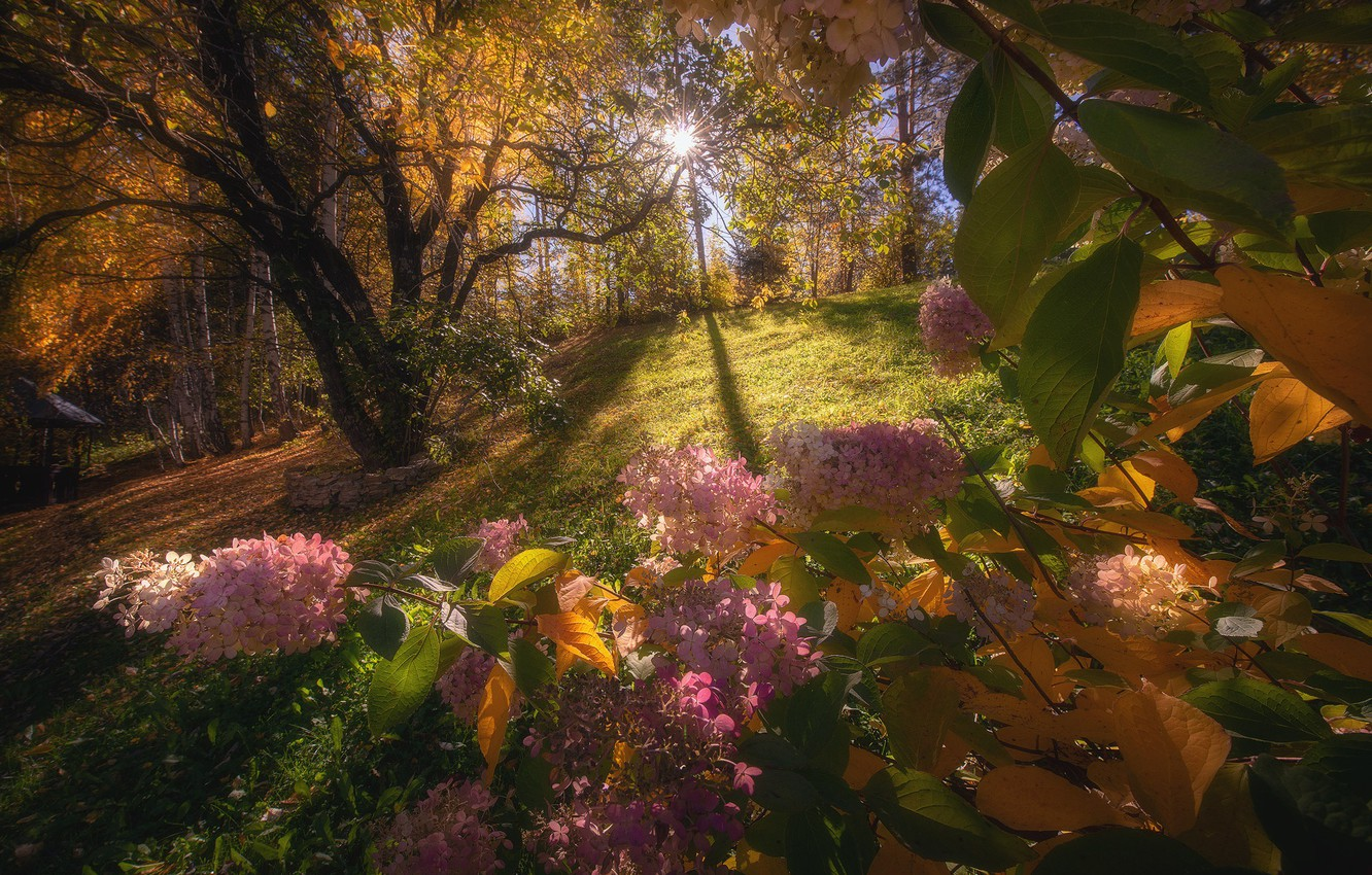 Photo wallpaper autumn, forest, the sun, light, trees, flowers, branches, nature, Park, glade, foliage, pink, the bushes, …