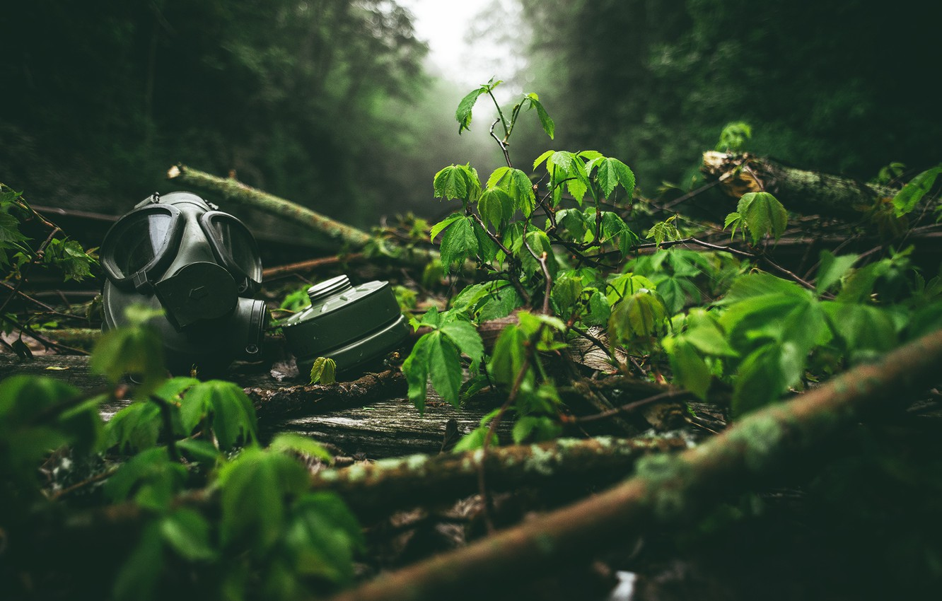 Photo wallpaper Green, Fog, Forest, Mask, Leaves, Twigs