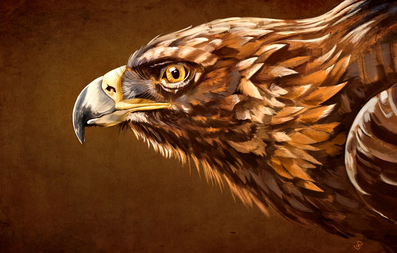 Photo wallpaper beak, Bird, Eagle, Aquila, the head of an eagle