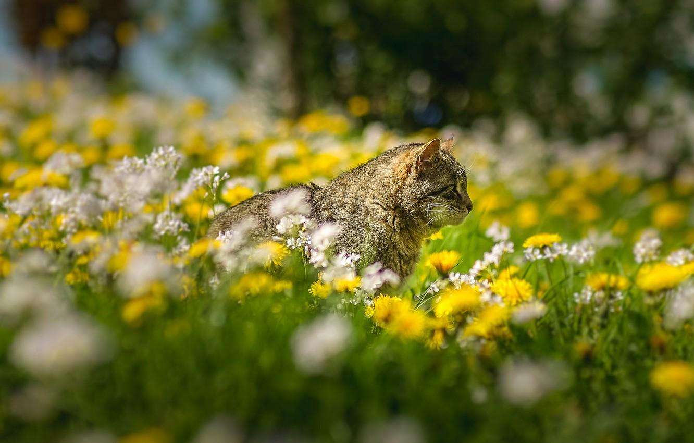 Photo wallpaper grass, cat, flowers, bokeh