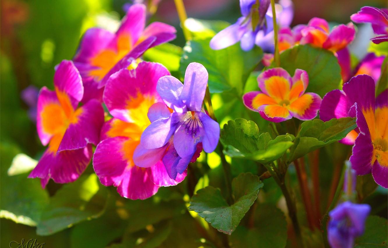 Photo wallpaper Flowers, Flowers, Colors