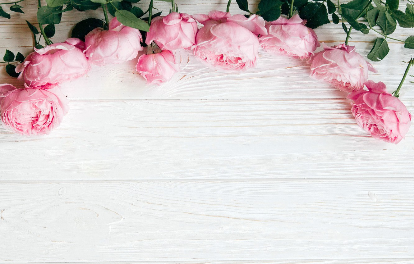 Photo wallpaper flowers, roses, pink, wood, pink, flowers, roses