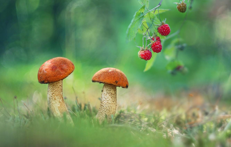 Photo wallpaper raspberry, photo, mushrooms