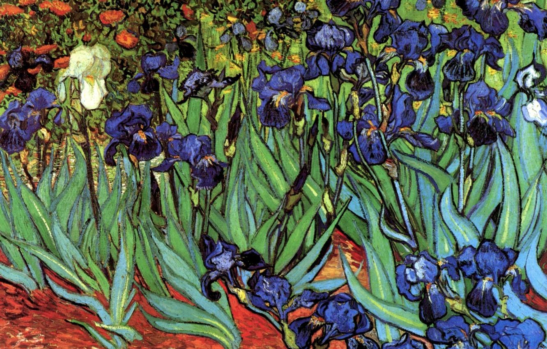 Photo wallpaper Vincent van Gogh, Irises, different colors