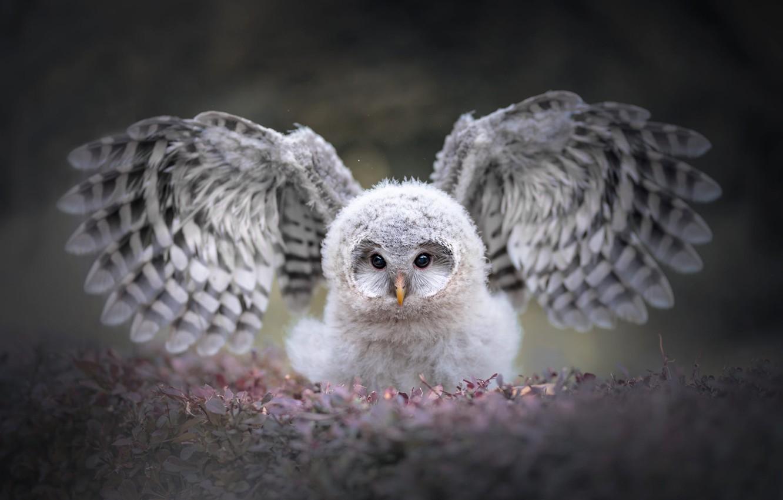 Photo wallpaper eyes, look, leaves, nature, grey, background, owl, bird, portrait, wings, fluff, beauty, chick, stroke, bokeh, …