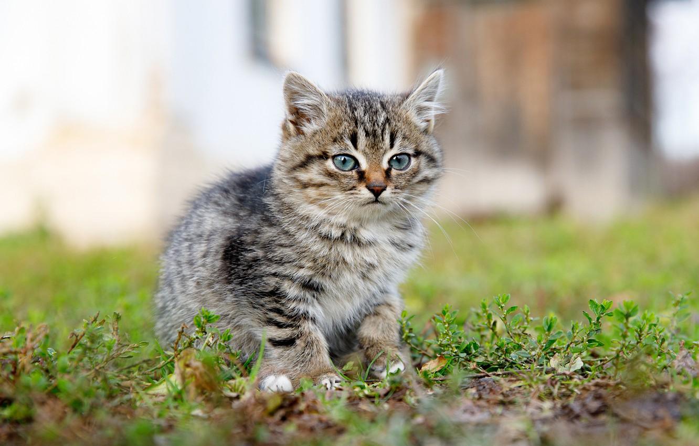 Photo wallpaper grass, kitty, bokeh, Ilya Garbuzov