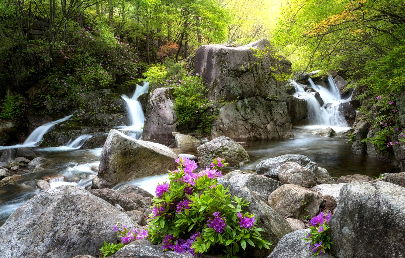 Photo wallpaper Greens, Flowers, Water, Stream, Waterfall, Forest, Leaves, Stones, Rapids