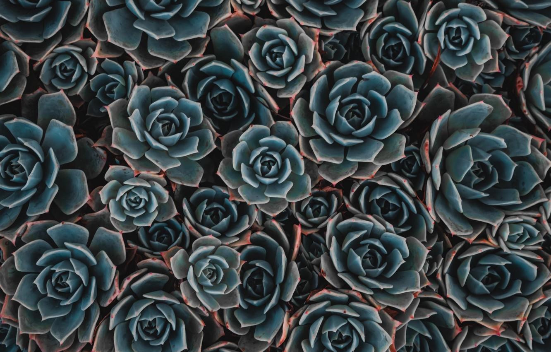 Wallpaper Background Plants Succulent Succulents Images For Desktop Section Cvety Download